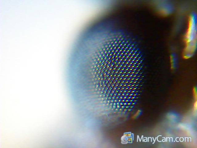 Unser erstes kindermikroskop im test