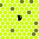 Katzen fangen